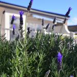 Lavender Terrace B&B,  Port Elizabeth
