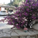 Casa di Giorgio,  Nikiana