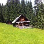 ホテル写真: Schmiedsipplhütte, ゴーザウ