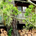 Rustic Cabin like a Treehouse, Carmel