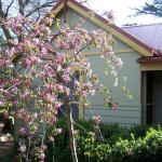 Fotos del hotel: Shelton-Lea Bed & Breakfast, Katoomba