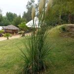 Hotel Pictures: Camping Rustikon Las Cabras, Las Cabras