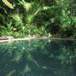 Фотографии отеля: Daintree Rainforest Retreat Motel, Кейп-Трибьюлейшн