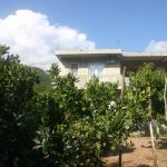 Apartments Garden,  Budva