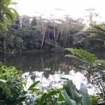 Hotel Pictures: Colo-I-Suva Rainforest Eco Resort, Suva