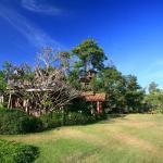 Pai Treehouse, Pai
