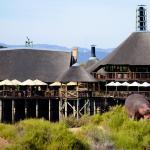 Buffelsdrift Game Lodge, Oudtshoorn