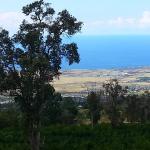 Mango Sunset BnB Inn at Lyman Organic Kona Coffee Farms, Kailua-Kona