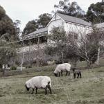 ホテル写真: House on the Hill Bed and Breakfast, Huonville