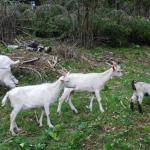 Farm Stay Dolinar Krainer, Bohinjska Bela