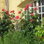 Hotel Pictures: Le Manoir d'Arlette, Fatouville-Grestain