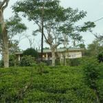 Wille Group Plantation Bungalow,  Deniyaya