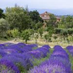 Azienda Agrituristica Podere Pratovecchio, Montefollonico