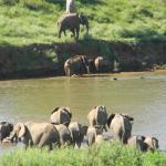 Kruger View Chalets,  Malelane