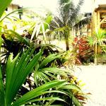 Hotel Pictures: Kiwi Hostel Mompiche, Mompiche