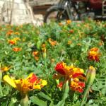 Tiebi Garden Hotel, Daocheng