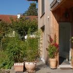 Bio-Studio Königskerze, Romanshorn