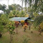 Hotel Pictures: Osa Jungle Cabin, Dos Brazos