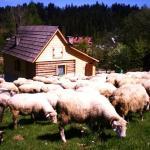 Domek przy Olczyskiej,  Zakopane