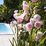 Hotel Pictures: Résidence Ogliastrello, Olmeto