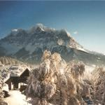 Alpenflora,  Lermoos