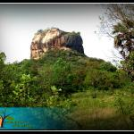Green Grass Homestay, Sigiriya