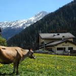 Hotel Pictures: Hotel Restaurant Walserhof, Medels im Rheinwald