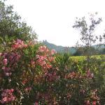 Hotel Pictures: Terre De Vigne, Grimaud
