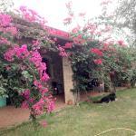 Casa Santina, Girasole