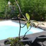 Hotel Pictures: Les Centaurines, Saint-Siffret