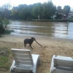 酒店图片: Paraiso Delta, Tigre