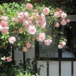 Rose Cottage at The Elms, Christchurch