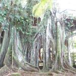Topos Tree House, Cahuita