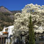 Hotel Pictures: Chateau Schüpbach, Vitznau