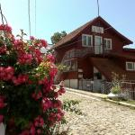Vila Floare de Colt, Sinaia