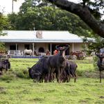 Santa Paloma Guest Farm, East London