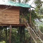 Treehuts, Habarana