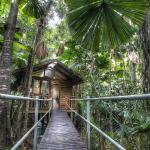 Photos de l'hôtel: Daintree Wilderness Lodge, Daintree