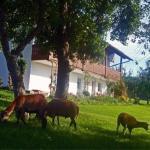 Ferienhof Pfeffer,  Lam