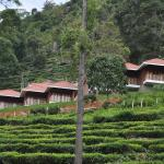Hanging Huts Resorts, Kotagiri