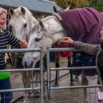 Hotel Pictures: Green Meadow Farm Bed & Breakfast, Bridgend