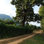 Yang Tone Farm Stay, Chiang Dao
