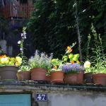 Hotel Pictures: Le Liseron Bleu, Vienne