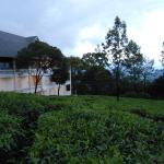Tea Harvester,  Munnar
