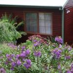 Bluebell Cottage, Leura