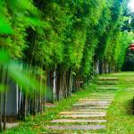 Palm Grove Resort, Pattaya, Na Jomtien