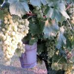 Apartment Val D Orcia 6, Celle sul Rigo