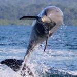 Dolphin Bay Hideaway, Bocatorito