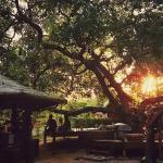 Coffee and Resort,  Ko Phayam