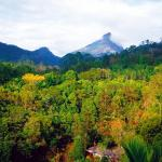 Hotel Pictures: Mt Warning Rainforest Retreat, Uki